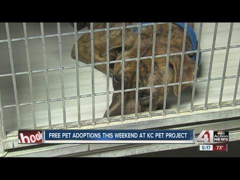 Free pet adoptions at KC Pet Project
