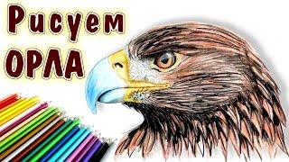 КАК НАРИСОВАТЬ ГОЛОВУ ОРЛА. How to draw an eagle head(КАК НАРИСОВАТЬ ГОЛОВУ ОРЛА. How to draw an eagle head Поэтапно рисую голову орла. Цветные карандаши. Видео ускоренное,..., 2016-08-29T12:08:58.000Z)