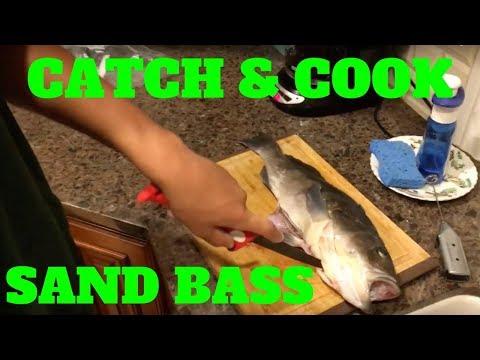 How To Filet Sand Bass Funnydog Tv