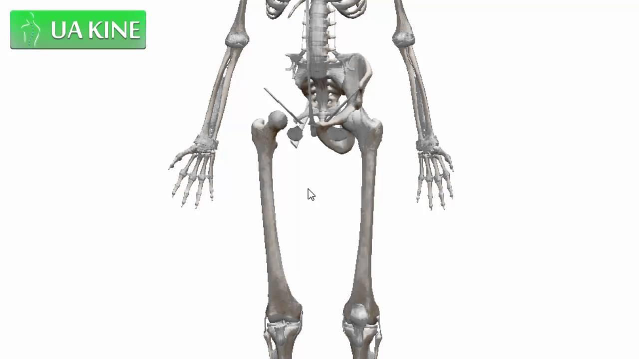 Anatomía del Fémur (Osteologia) - YouTube