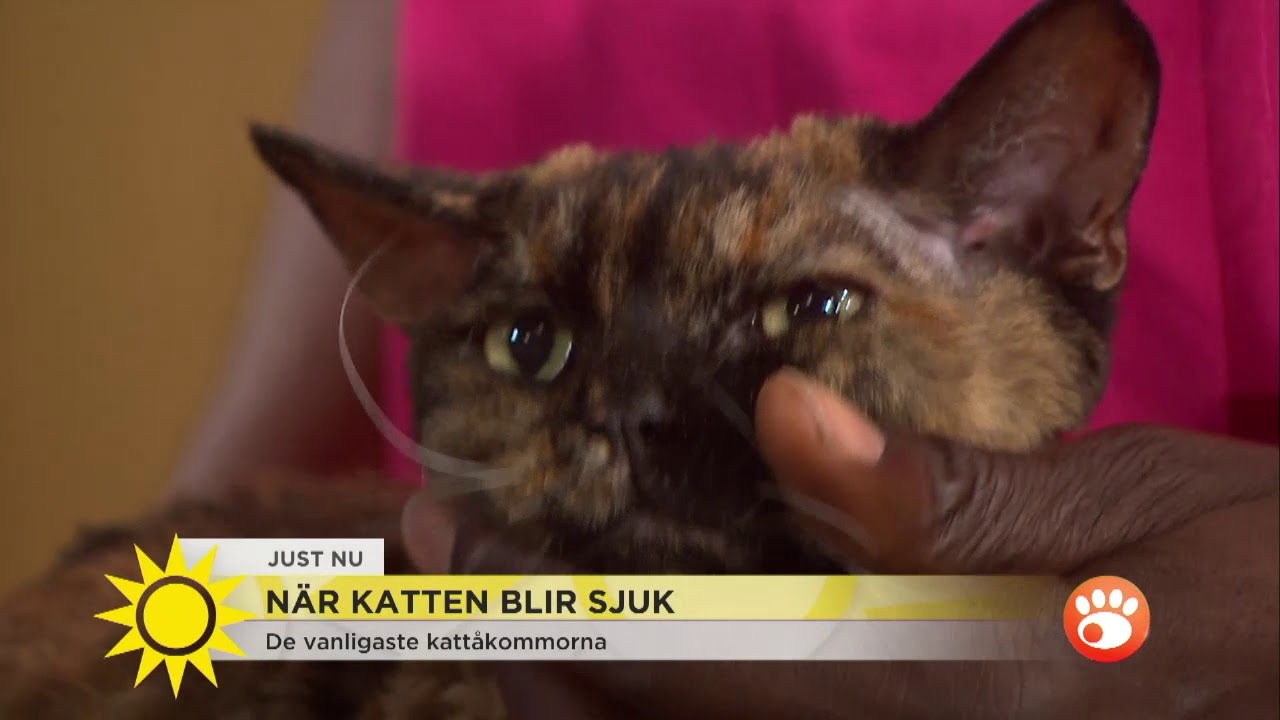 katt kön video
