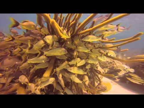 PADI Open Water certification dives Belize April 2014