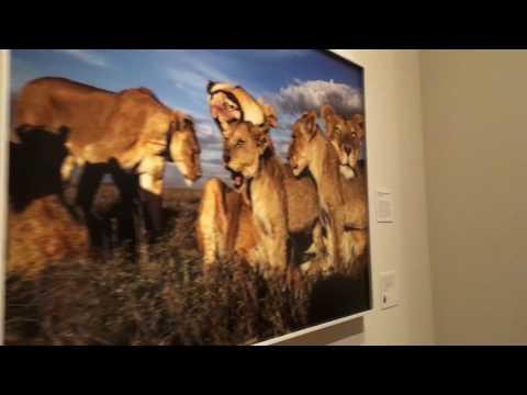 "Tour the Philadelphia Museum of Art's ""Wild: Michael Nichols"" exhibit"