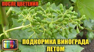 Удобрение винограда осенью, весной, летом (видео)