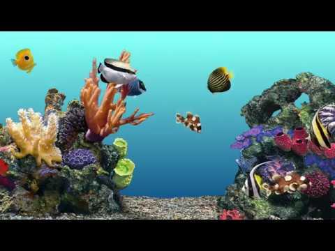 Aqua Real 3HR 🐠 Water Bubbles Sound & Coral Reef Virtual Aquarium