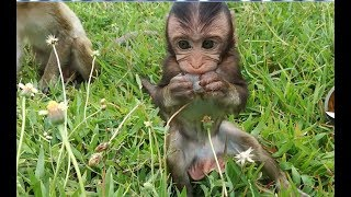 Video Top cute baby monkey in the world, Flit hungry so much download MP3, 3GP, MP4, WEBM, AVI, FLV Juli 2018