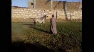 Download Video اجمل  دلع حصان MP3 3GP MP4
