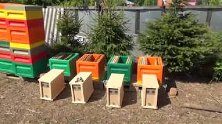 Пересадка пчелопакетов в ульи