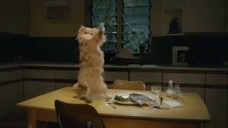 Persian Cats Fun Interesting Facts Most Popular Cat Breed