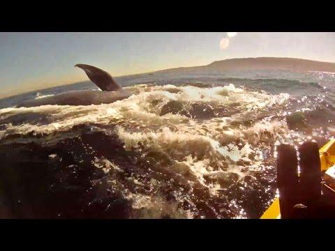 קייאקים עם לוויתנים