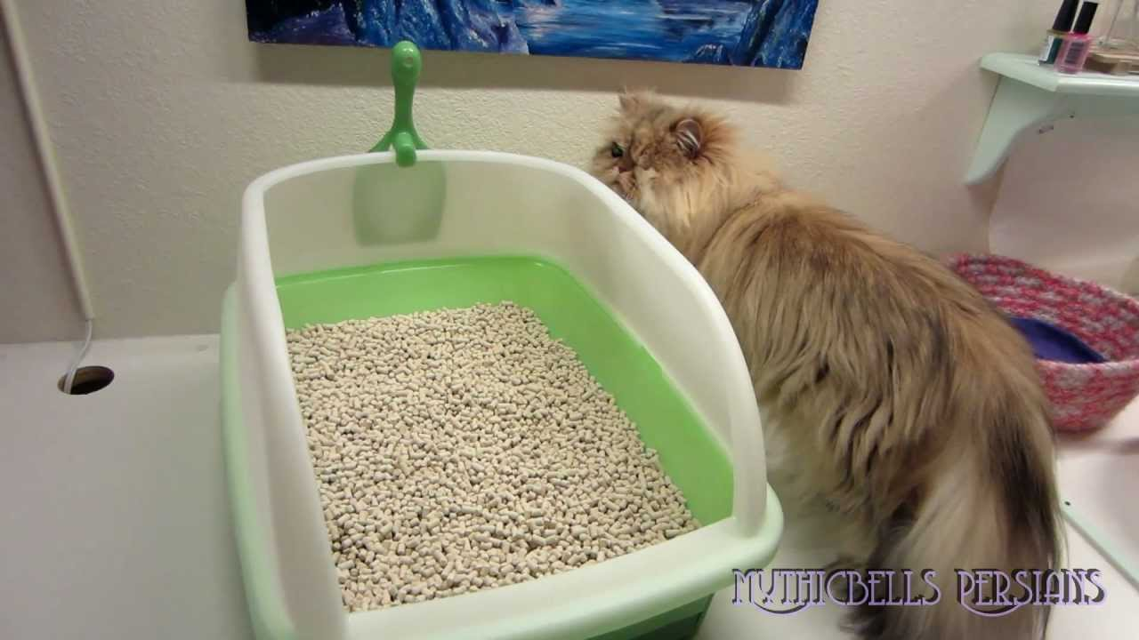 12 12 08 Tidy Cat Breeez Litter Box Review Youtube