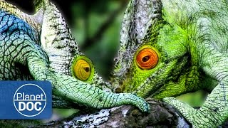 Madagascar. The World of the Lemurs (Documentary Part 3)