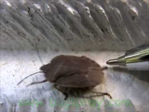 Stinkbug video