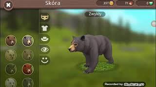 Nowe zwierzę niedźwiedź!