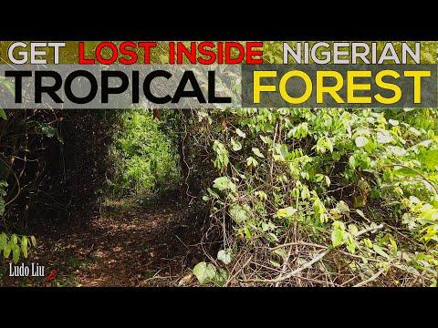 NIGERIAN WILDLIFE - 4k Ultra HD Immersive  Documentary  - Ibadan NIGERIA [2021]