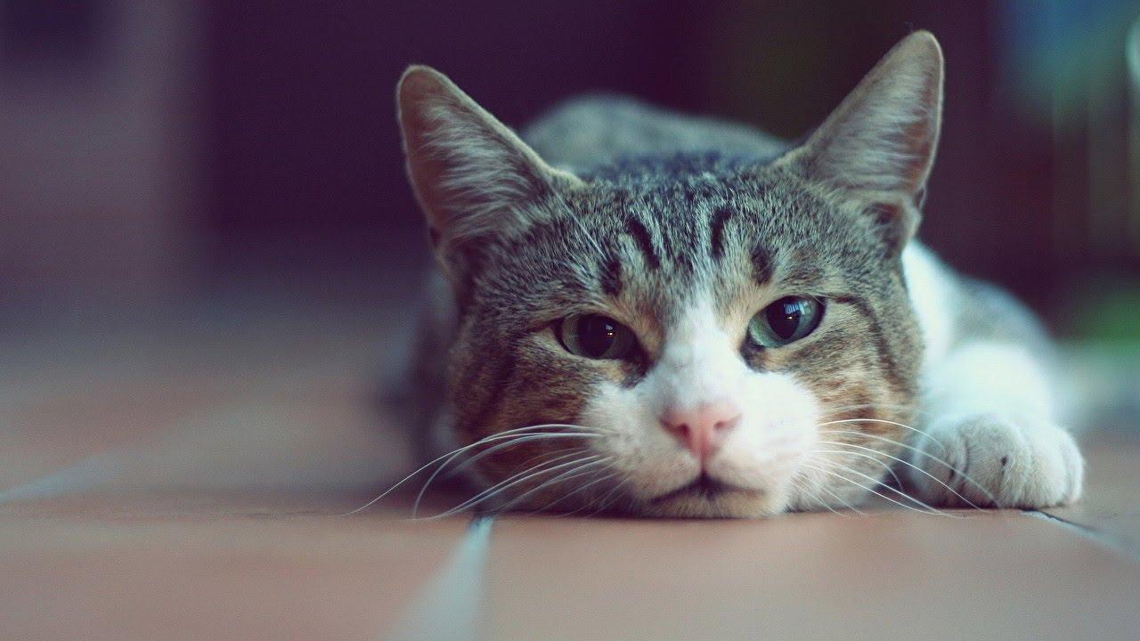 Рождение, прикольные картинки на аву котят