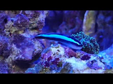 琥珀水槽の~小さなお魚さんたち*^▽^*