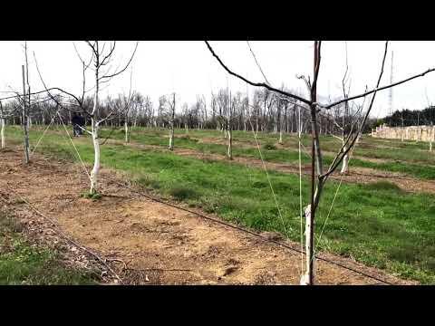 Bulgurlu Ceviz Çiftliği