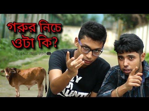 গরুর নিচে ওটা কি?kurbani special video|by adda bazz