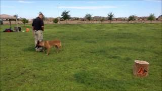 Example Of K9 Obedience   Www.alphak9.org