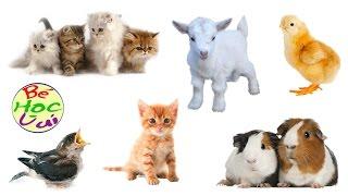 Dạy bé học nói các loài vật tiếng Việt, Thế giới động vật hoang dã, dạy trẻ thông minh sớm