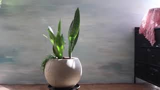 서초역꽃집개업선물추천 공기정화실내식물 산세베리아 고급화…