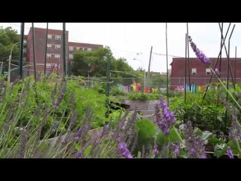 Increasing Job Opportunities in Brownsville, New York