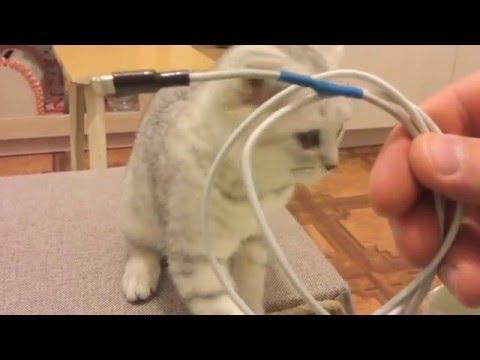 Вопрос: Почему котёнок грызёт провода?