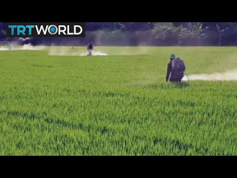 Roundtable: Are pesticides necessary for food production?