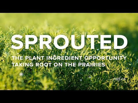 Sprouted: The plant ingredient opportunity taking root on the Prairies