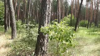 Какая красота природа Харьковская область.