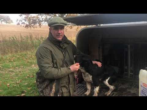 Shoot day Hamels Park 9th Nov 2019 Gundog Training and picking up