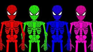 Colors Spiderman Becomes Skeleton Man Finger Family | Spiderman Compilation Children Nursery Rhymes