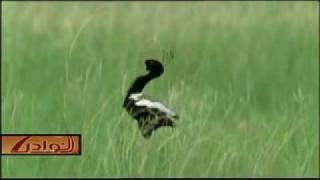 الطائر المتخفي