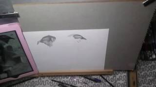 How to draw a Staffordshire bull terrier