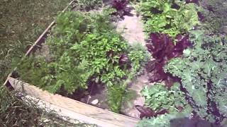 Elevated Gardening|best Above Ground Garden|top Elevated Raised Garden Beds For Vegetables And Herbs