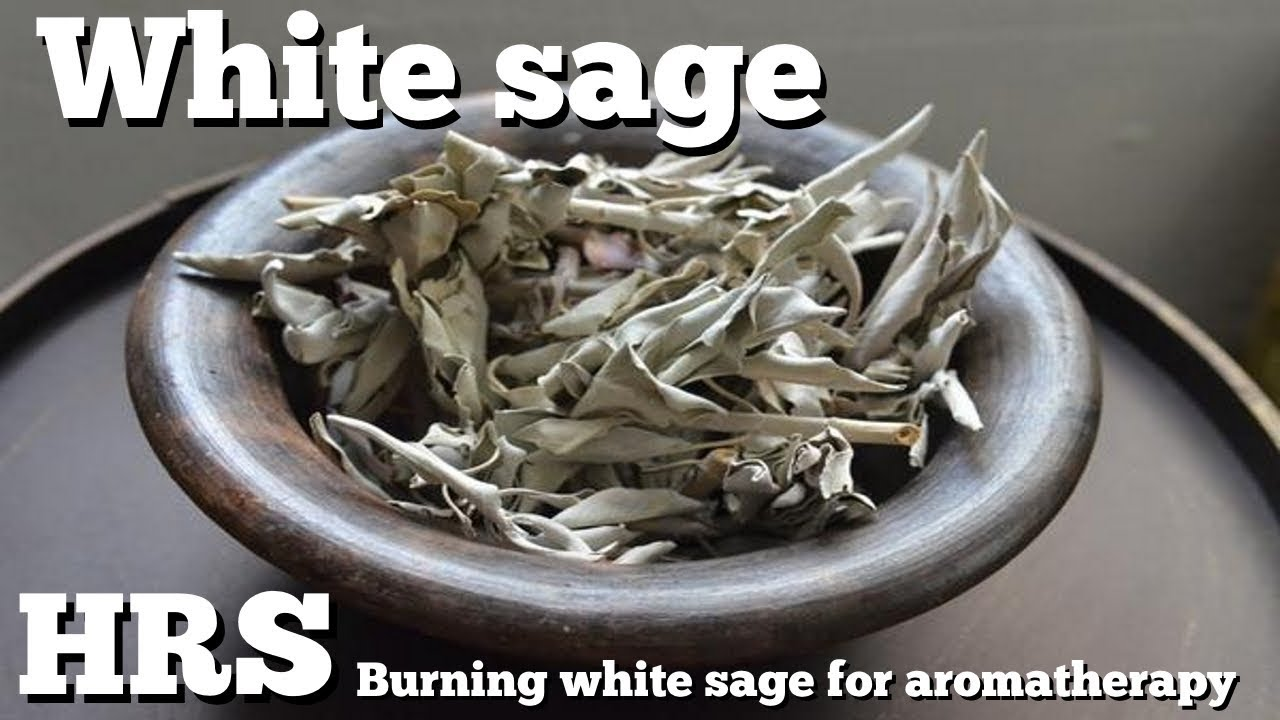 ⟹ White sage smudging | Aromatherapy | Burning Salvia apiana in the  greenhouse