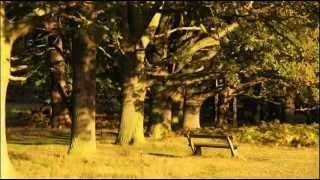 Wolfgang Amadeus Mozart - Symphony № 1 E flat major, K16
