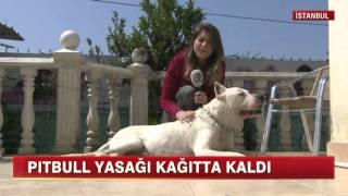 Pitbull Röportaj - Kanal D Haber - Serdar YALÇINKAYA - Pethizmeti.com