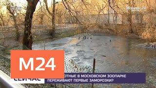 Как животные в Московском зоопарке переживают первые заморозки - Москва 24