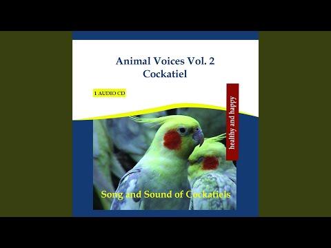 Animal Voices Vol. 2 Cockatiel - Song and Sound of Cockatiels