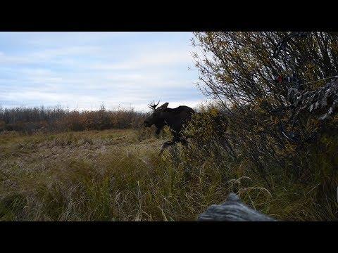 2017 Alberta Archery Moose