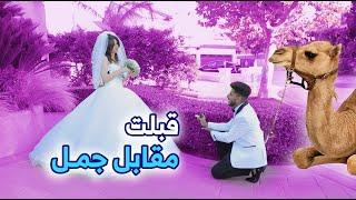 كواليس انساني | اجنبيه تقبل الزواج مقابل جمل