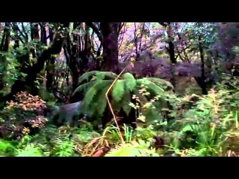 Rain Forest with Birds from Aotearoa Paul Moss Mozasaur