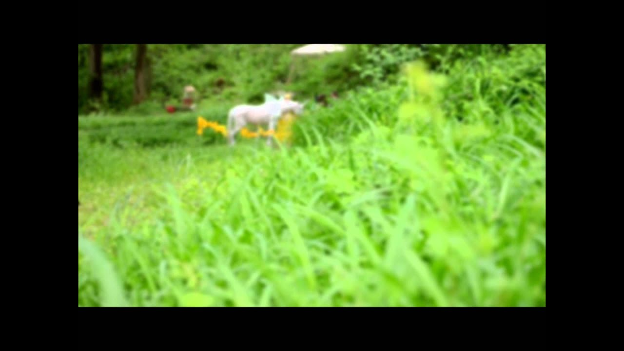 Real Unicorn Sighting UPSTATE Maryland. Crazy! - YouTube  Real Unicorn Si...