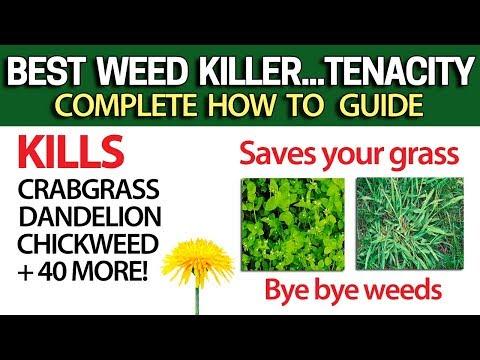 Kill Weeds Crabgrass + 40 More & NOT Your Grass With Tenacity - DIY