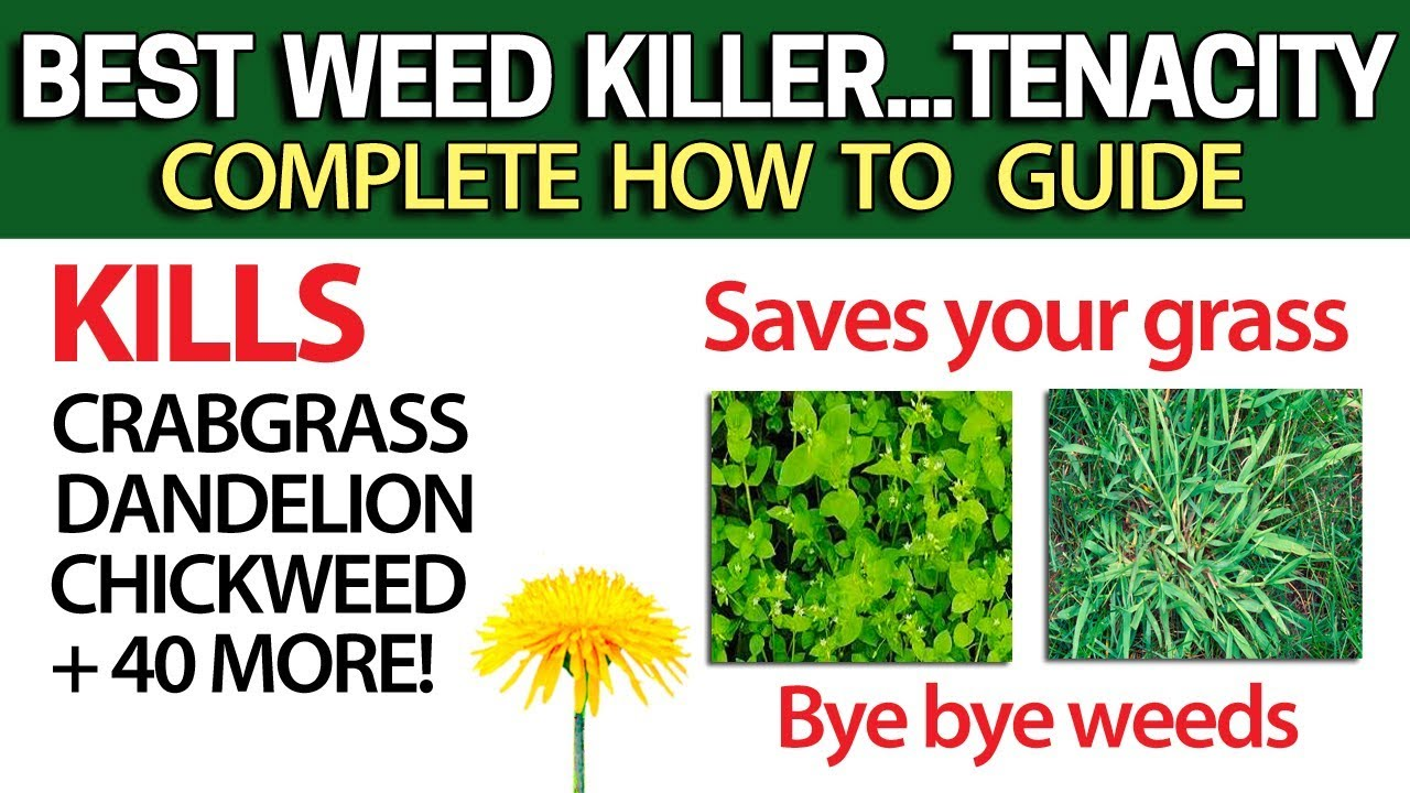 Strongest Weed In 2019 10 Herbicides That Kill