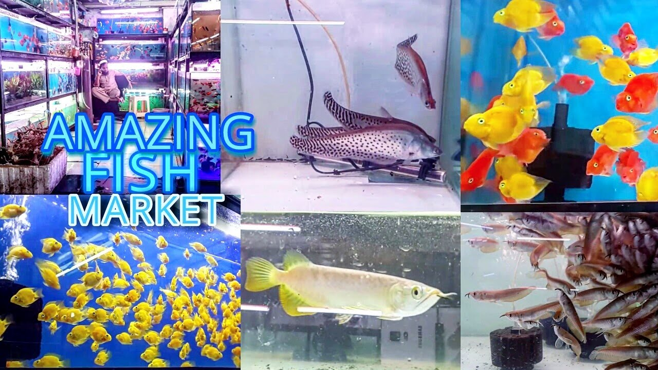 Kurla Fish Aquarium Market Fish In Cheap Price Mumbai Youtube
