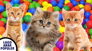 Lagu Anak Anak Si Meong Kucing Lucu Mandi Bola Populer