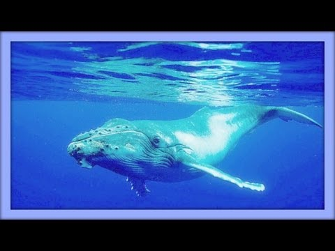 ❀ Sound Therapy ~ Whales Singing ~